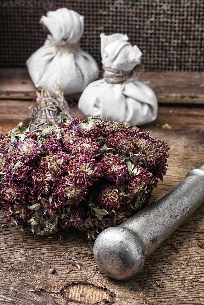 plante médicinale photo