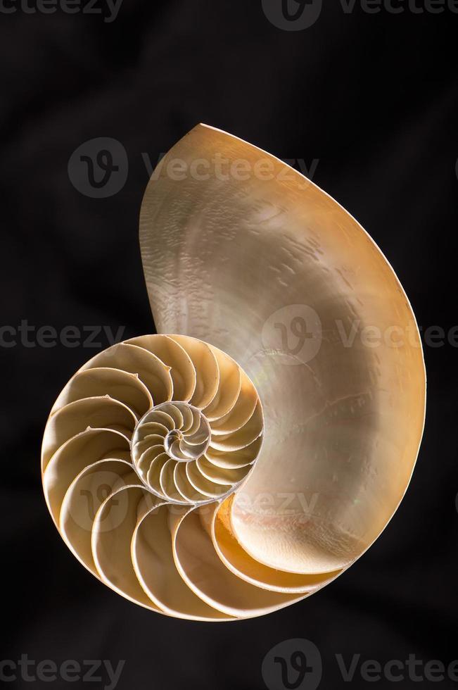 nautilus 96 photo