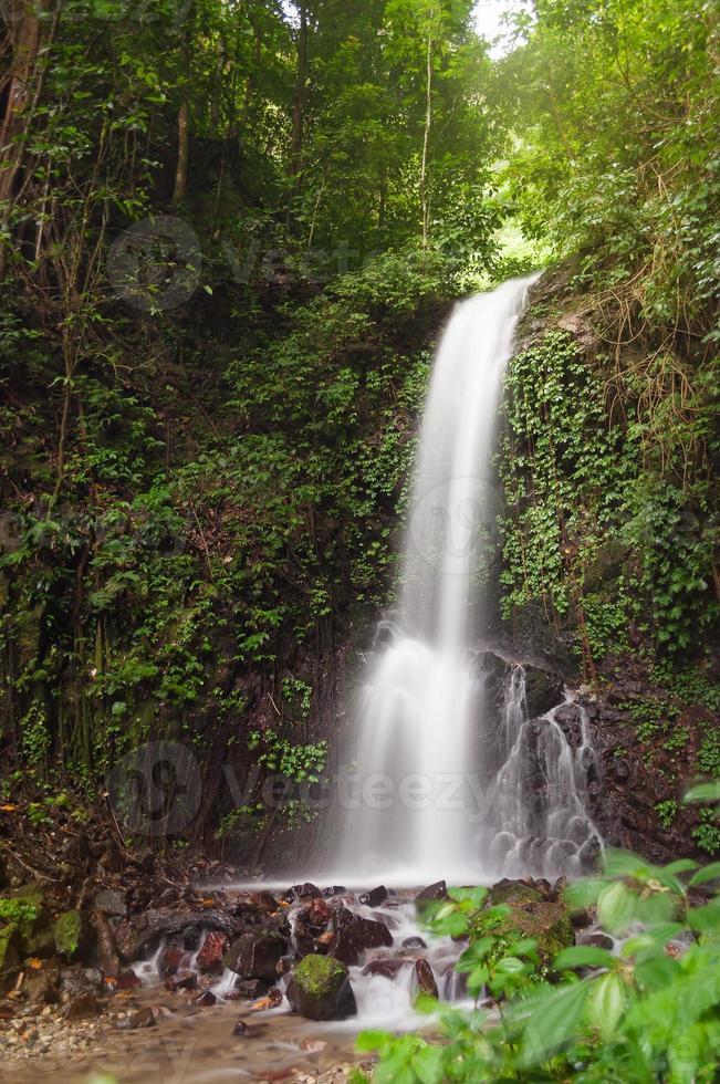 petite cascade dans la jungle photo