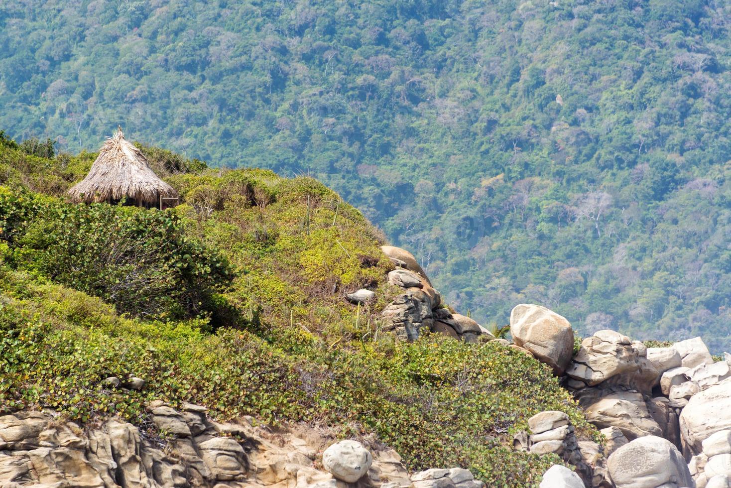 cabane de la jungle photo