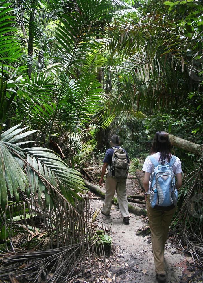 randonnée dans la jungle photo
