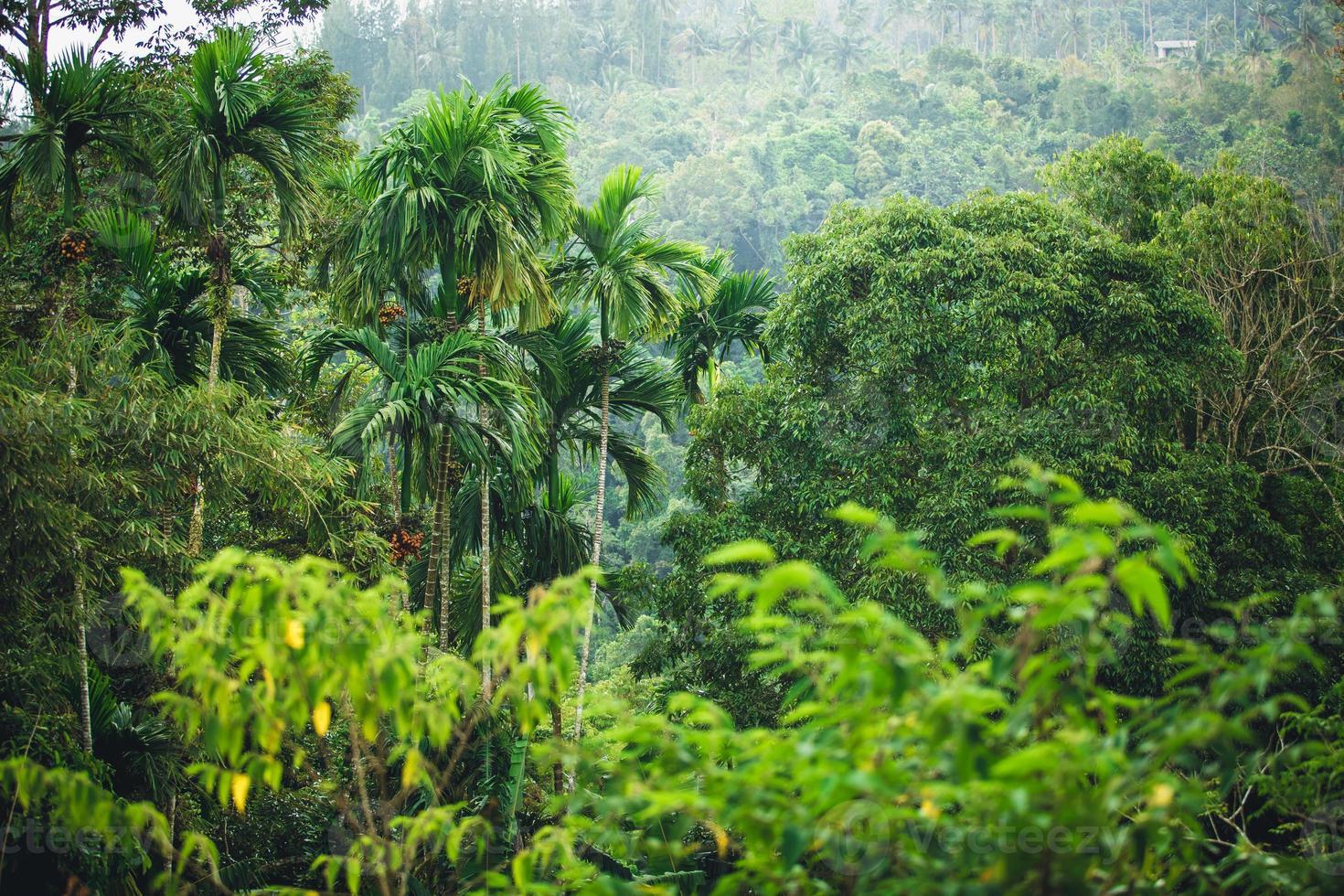 jungle de thaïlande photo