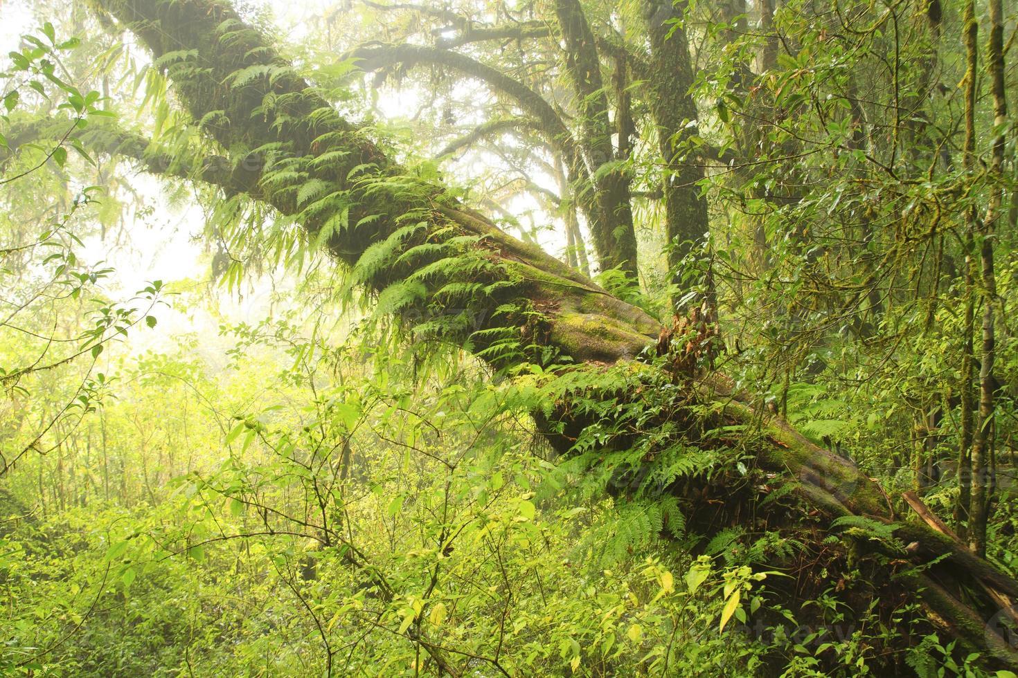 jungle verte, forêt tropicale d'arbres du sentier ang ka photo