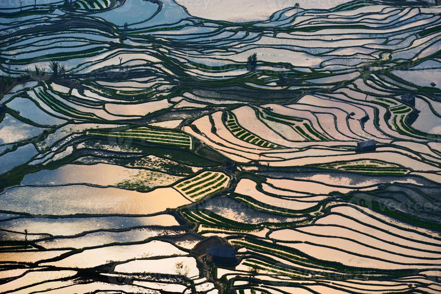 rizières en terrasses photo