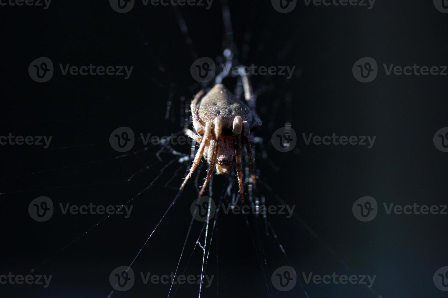 porche araignée côté lumière photo