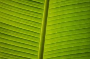 belle feuille verte