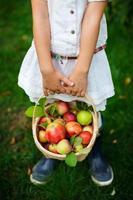 pommes biologiques dans un panier photo