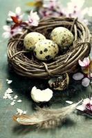 oeufs de Pâques de caille dans un nid photo