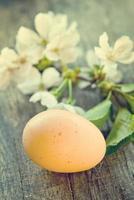 fleurs de printemps et oeufs de pâques photo