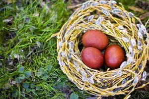 oeufs de Pâques dans le nid de saule photo