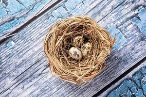 oeufs de caille dans un nid photo