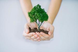 mains étreignant les arbres photo