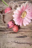 oeufs de pâques avec des fleurs de marguerite gerbera
