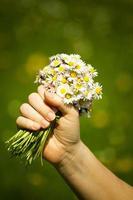 bouquet de marguerites photo