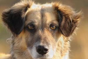 portrait de chien mignon photo