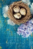 oeufs de caille avec plumes photo