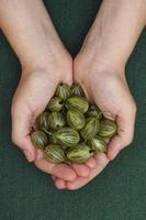 groseilles vertes récoltées dans les paumes de la femme photo