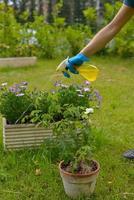 pulvérisation de pesticides photo