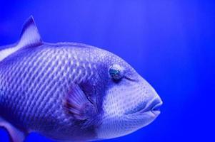 poisson de mer photo