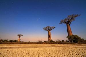étoiles de baobab photo