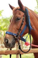 cheval face à la ferme photo
