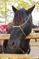 cheval majorcan