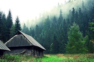 forêt. photo