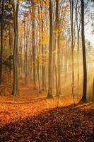 forêt de hêtres photo
