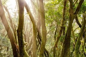 forêt de lauriers