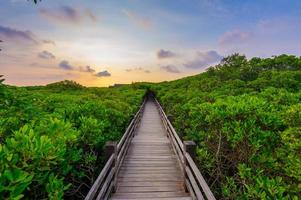 forêt de mangrove photo