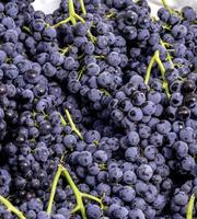 petits raisins ronds avec des tiges vertes photo