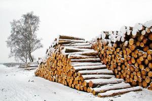 tiges d'arbres empilés photo