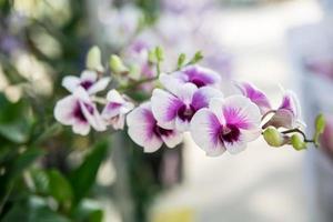 belle fleur d'orchidée thaïlandaise
