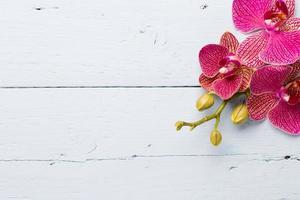 orchidée. photo