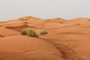désert arabe photo