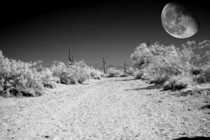 lune du désert photo