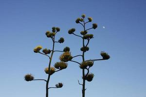 plantes du désert photo