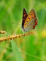 ailes colorées photo
