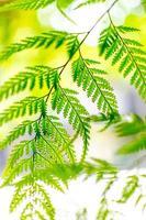 fougère verte photo