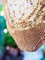 nid d'abeille (ruche)