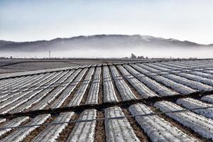 champ agricole recouvert de bâches en plastique