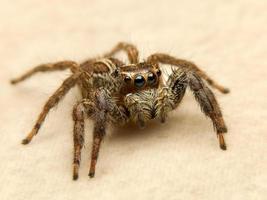 araignée v2