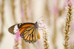 papillon orange sur fleur photo