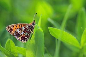 papillon sur les feuilles vertes