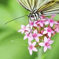 siroter du nectar photo