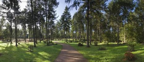 forêt enchantée photo