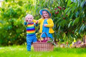 adorables enfants cueillant des cerises dans une ferme