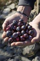 mains aux olives photo