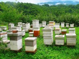 ruches en bois sur la clairière pittoresque dans les montagnes photo