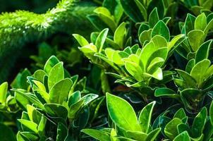 gros plan de belles feuilles vertes fraîches photo